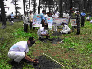 NCC Tree Plantation